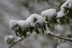 ckuchem-8077 (christine_kuchem) Tags: asthaufen baumstamm eis forst frost haufen holz staatsforst stmme tiere unterschlupf wald wasser wildnis winter winterschlaf winterwald gefroren gewsser kalt naturnah reif schnee wild ste