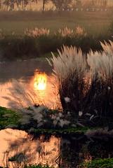 Morning in a Pond (Babar@Graphy) Tags: light morning nikon pakistan pond water marsh sunrise sunset golden punjab asia