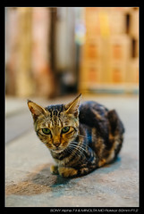 DSC09416 (YKevin1979) Tags: hongkong  yaumatei yaumateiwholesalefruitmarket   sony ilce7m2 a7ii a7m2 minolta rokkor manualfocus  md 50mm 50 f12  cat