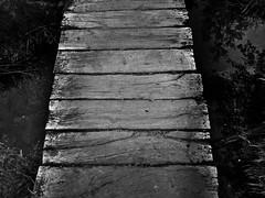 Der Weg ist das Ziel (One-Basic-Of-Art) Tags: blackandwhite bw sw black white schwarzundweis schwarz weis weiss noiretblanc noir blanc natur nature arbersee groserarbersee bayrischerwald brcke steg wasser water holz bavaria bayern urlaub 1basicofart onebasicofart oboa annewoyand woyand anne