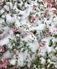 Seen in Helena,Montana (montanatom1950) Tags: helenamontana snow cold winter