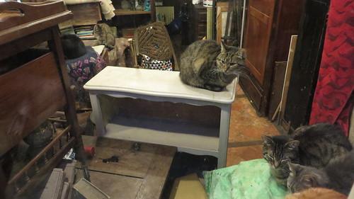 20161011-46 Senlis » L'antiquaire aux chats
