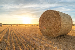 Hay Bales (technodean2000) Tags: hay bales nash point south wales uk nikon d610 lightroom