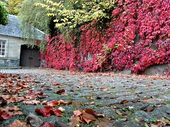 The Wall in Autumn. ( Explore 16-10-16 ) (Flyingpast) Tags: wb2000 tl350 autumn fall nature leaves wall road cobbles colour red crimson splendid pollokhouse nationaltrust scotland scottish visitscotland park outdoors wet