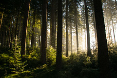 The Forest and the Mist (beatriceverez) Tags: black forest south light green trees undergrowth gradient shadows
