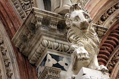 special lion 2 (Serenae) Tags: trip light vacation italy sculpture holiday streets building history window beautiful architecture spring europe italia break shadows cathedral details lion arches tuscany historical siena walls duomo toscana 2013