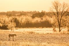 8 Degrees (jamescaldwell1) Tags: morning november light horse cold ice landscape frozen warm frost 8 kansas degrees 2014 outsideshotfineartphotoscom