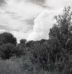 A Sunday Stroll (matthew.vortex) Tags: manual summer landscape kentucky georgetown pentaxspotmeterv aristaeduultra400 yashicamat124g yashica yellowfilter anseladams zonesystem clouds trees