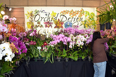 2016-07-23 08765 Orchid Show, SF County Fair Bldg (Dennis Brumm) Tags: sanfrancisco california july 2016 orchids exposition flowers plants bromeliads