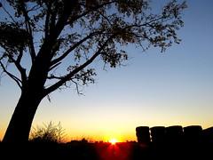 IMG_0013x (gzammarchi) Tags: italia paesaggio natura pianura campagna ravenna villanovadiravenna tramonto albero sole