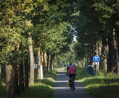 Tandem (Andrew B47) Tags: brabant broek broekdijk netherlands nuenen cycletrack fietspad tandem