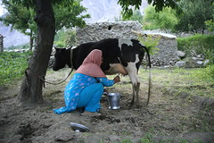 Asri Bano (Akhuwat BPP) Tags: northerenareas hunza pakistan interest free loans microfinance entrepreneurship pakhtoon ordinary people small business akhuwat