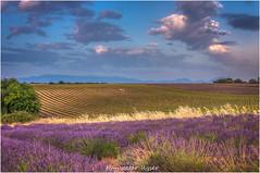 Valensole (Hanspeter Ryser) Tags: provence valensol frankreich landschaft lavendel france wolken sonnenuntergang