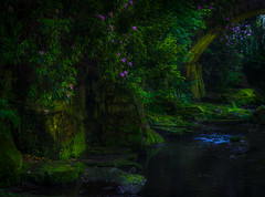 Jesmond Dene Newcastle UK- (Allan A Albery) Tags: blue lightroom sonya7ii newcastle jesmond dene landscape river tranquil atmospheric greatphotographers sonyzeiss2470mmlens naturallight shadows colour stonebridge