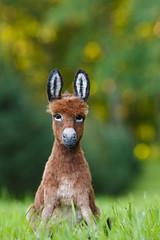 Donkey_10 (kdc123) Tags: donkey furred breyer custom ooak chestnut miniature