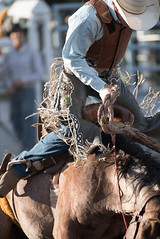 Tak_CPRA_2016-4798 (takahashi.blair) Tags: coachtak rodeo blairtakahashitakahashiblaircoachtakblairtakahashi pincher creek barrel racing bronc rope bareback steer bullriding