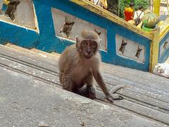 IMG_1170 (oowhatsthatdoo) Tags: kualalumpur kl nature monkey temple steps