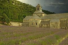 Sénanque, La Provence France (m@®©ãǿ►ðȅtǭǹȁðǿr◄©) Tags: france gordes sénanque abadíadesénanque abbayenotredamedesénanque sénanqueabbey lavanda lavande lalavande olympusepl1 zuikoed14÷42mmf35÷56 marcovianna marcoviannafotógrafo m®©ãǿ►ðȅtǭǹȁðǿr◄©