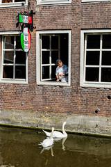 009 - Amsterdam (Alessandro Grussu) Tags: leica m9 telemetro rangefinder messsucherkamera paesi bassi netherlands niederlande olanda holland citt city stadt amsterdam capitale capital hauptstadt vita urbana urban life cigno swan schwann