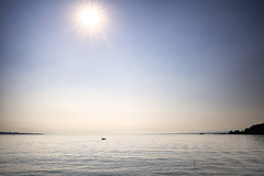 Ruderer auf dem Bodensee (luebke_) Tags: ruderer rudern rowing bodensee sculling lakeconstance germany summer sunny lake