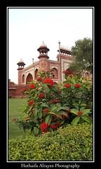 Main gate of #tajmahal #taj_mahal #India #uttarpradesh #agra #sevenwondersoftheworld #sevenwonders #shahjahan #mumtazmahal  # #  #_   #__  #_  # # # # (alrayes1977) Tags: tajmahal india uttarpradesh agra sevenwondersoftheworld sevenwonders shahjahan mumtazmahal