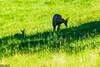 DSC_9521 (Costi Jacky) Tags: france naturereserve parcdemerlet