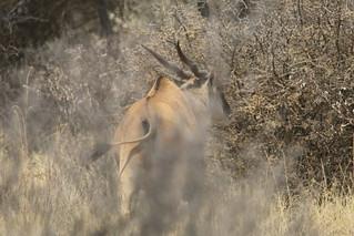 Namibia Plainsgame Hunt - Kalahari Desert 17