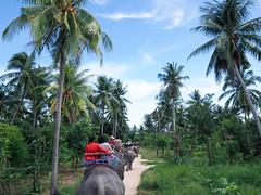 20160929-P9290226 (j12oppa) Tags: elephanttracking pattaya thailand elephants 코끼리트랙킹 파타야 태국