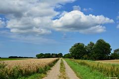 Feldweg in Friederiken-Vorwerk / Landkreis Friesland (berndwhv) Tags: getreidefeld kornfeld landscape landschap weg feldweg getreide bume deutschland norddeutschland niedersachsen landkreisfriesland friederikenvorwerk friedrichaugustengroden