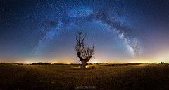 Tocando el cielo (Javier Martnez Morn) Tags: landscape paisaje milky way milkyway via lactea vialactea stars estrellas s starscape sonyalpha sony a6000 ilce alpha 6000 j jmartinez76 jmartinez jmartinezmoran night noche long exposure larga exposicion nocturna tree arbol oak campo