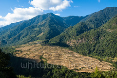 Rice fields (whitworth images) Tags: view community landscape nabji himalaya mountains himalayas rural bhutan harvest scene rice slope forest fields farming tourism mountain terraces ecotourism hike asia nature valley trek paddies south hills hill travel hillside agriculture trees ripe scenic korphu subsistence remote ricepaddies golden trail outdoors farm isolated village paddy traditional