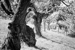 espressivit expressiveness (the best maio) Tags: tree albero grafica