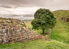 Sycamore Gap, Hadrian's Wall.jpg (jfishlock) Tags: challengegamewinner