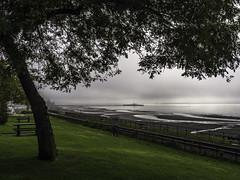 The fog persists (Tony Tomlin) Tags: whiterockbc whiterockbeach whiterockpier pier fog mist britishcolumbia canada saltwater ocean southsurrey