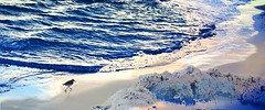 Ocean life (gailpiland) Tags: ocean bird sand beach