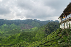 DSC_0082 (Dinesh Parate) Tags: scenic beauty landscape teaplantation hill station sky blue greenery mountains nature