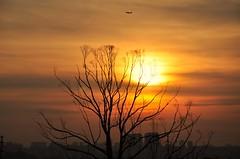 acima da cidade (Ruby Ferreira ) Tags: sunset silhuetas silhouettes airplane avio branches city cidade prdios buildings