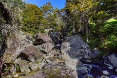 Basalt Boulders at Wairere Boulders Nature Park (Julie V. Simpson Photographer) Tags: wairerebouldersnaturepark basaltrocks newzealand nzbush trees ferns