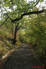 IMG_9198 (Pfluegl) Tags: wien vienna stadtwanderweg wandern wanderweg 1a sww kahlenberg leopoldsberg herbst autumn fall chpfluegl chpflgl christian pflgl pfluegl austria sterreich europa europe hikking weg pfad path track treck