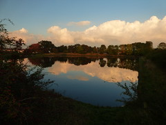 Reflections (davidntaylor1968) Tags: reflection water sky tree tranquilscene tranquility cloudsky scenics beautyinnature nature field growth nonurbanscene outdoors nopeople remote standingwater majestic rippled calm countryside photography october