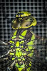 Dragonfly (Jan Moons) Tags: dragonfly macro tubes cheapmacro zerene stacked insect bug eyes facet nikon nikond600