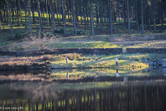 Father and Son fishing (Love Lens Life) Tags: autumn fishing father son fish lake river angler team reflection trees colourful