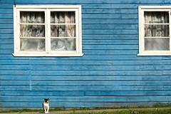 Ventanas (Marthaqr) Tags: lines minimal minimalism animal pet cat blue windows geometric valdivia gato