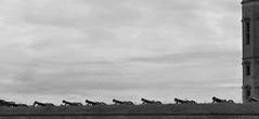 Danish Defence (brandsvig) Tags: bw 2016 july helsingr slot slott castle elsinore kronborg denmark danmark canons defence frsvar artillery kanoner artilleri nato resund lordnelson