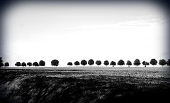 Straight Ahead. (god_save_the_green) Tags: trees bw nb noiretblanc arbres nature september2016 olympusepl1 mathildeaudiau environment white black grey
