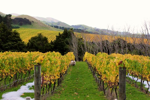 Wairarapa grape country