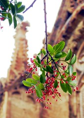 Berries in Famagusta (jonesjo87) Tags: cyprus famagusta