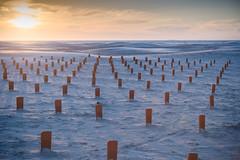 Oerol art, Terschelling 2013 (lambertwm) Tags: sunset sea art beach statue terschelling strand zonsondergang sand zee zand kunstwerk dakpannen