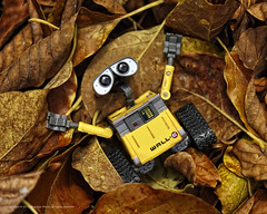 Wall-E. Laying In Leaves (Elmer The Fudd) Tags: park bridge brown leaves yellow toy bigeyes iso200 cartoon disney drain pixar animation marco lonely f3 trinidadtobago walle tto valsayn nikond700 ev145 speed12500 expcomp00 shotat105mm vr105mmf28gifed