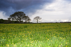 dandelion fields (dannyhow2011) Tags: storm clouds landscape yorkshire dandelion fields huddersfield netherton